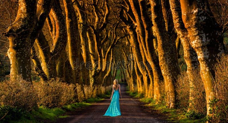 La mujer rubia hermosa en vestido largo de la turquesa se va en el medio de un camino forestal alineado árbol fotografía de archivo libre de regalías