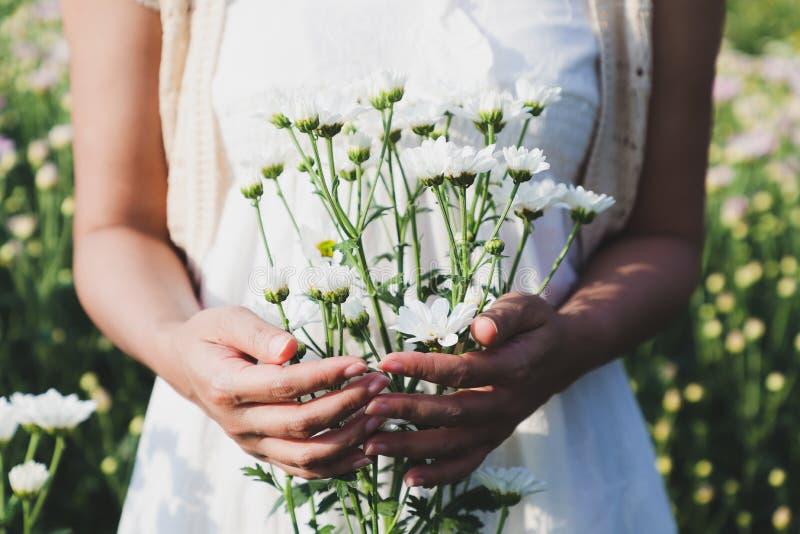 La mujer se colocaba que sostenía muchas flores blancas del crisantemo fotos de archivo