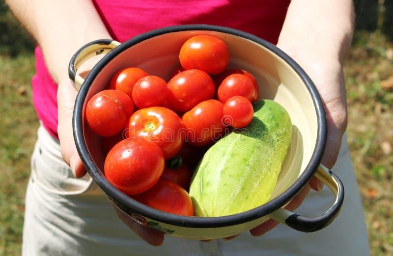 La mujer sostiene el cuenco con los tomates y el pepino fotos de archivo libres de regalías