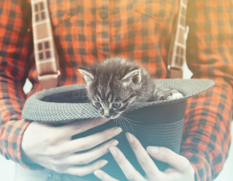 Download La Mujer Sostiene El Sombrero Con El Gatito Imagen de archivo - Imagen de poco, gato: 42440025