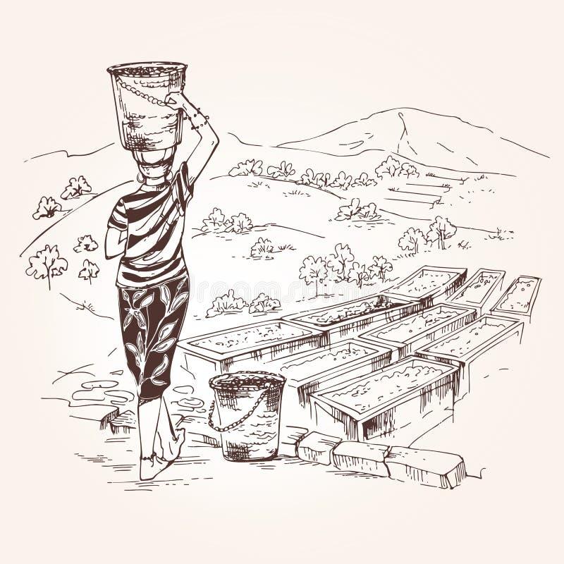 La mujer sostiene una cesta de granos de café stock de ilustración