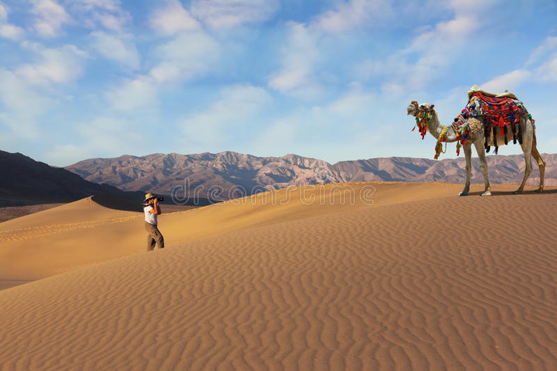 La mujer - turista que fotografía el camello imagen de archivo libre de regalías