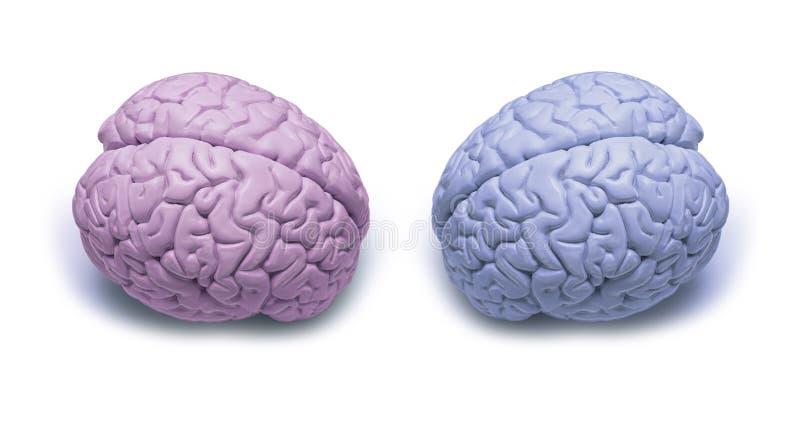 La mujer versifica cerebros del hombre fotos de archivo