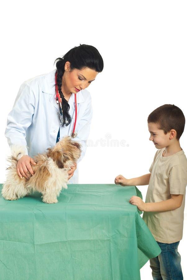 La mujer veterinaria examina el perrito foto de archivo libre de regalías