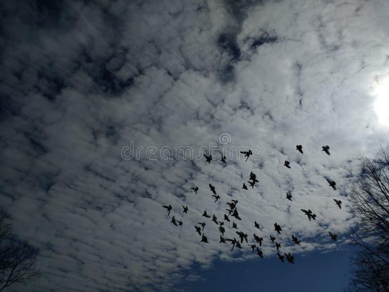 La multitud de la paloma vuela en las nubes del cielo foto de archivo