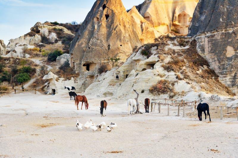 La multitud de patos y de caballos en la cueva contiene el fondo Goreme Cappadocia Turquía foto de archivo