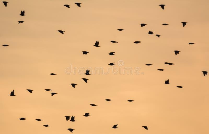 La multitud siluetea durante puesta del sol imagenes de archivo