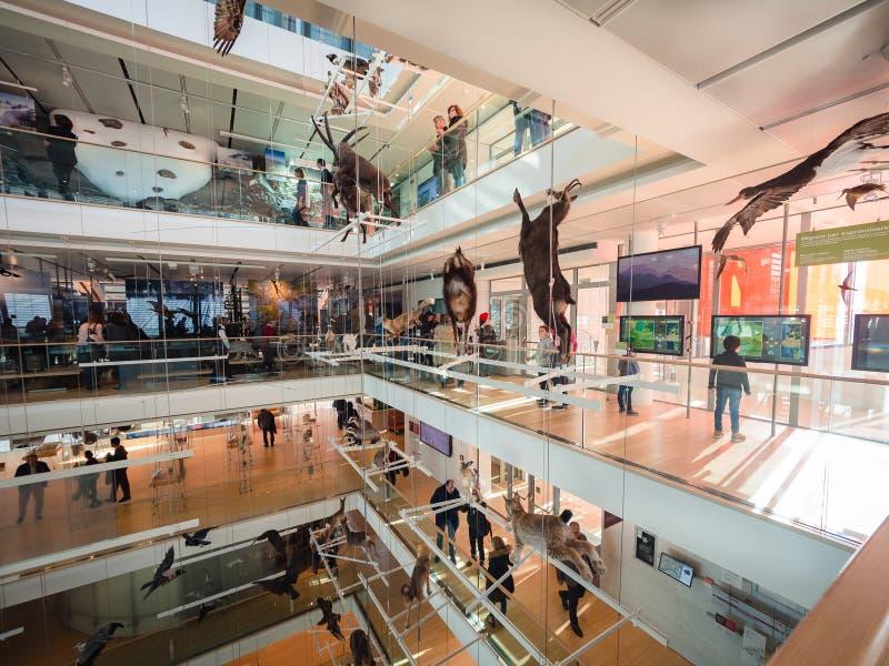 La MUSA è il museo delle scienze di Trento L'interno i immagine stock