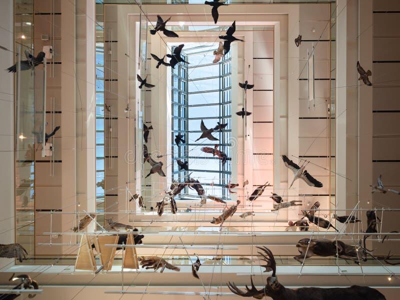 La MUSA è il museo delle scienze di Trento L'interno i fotografie stock libere da diritti
