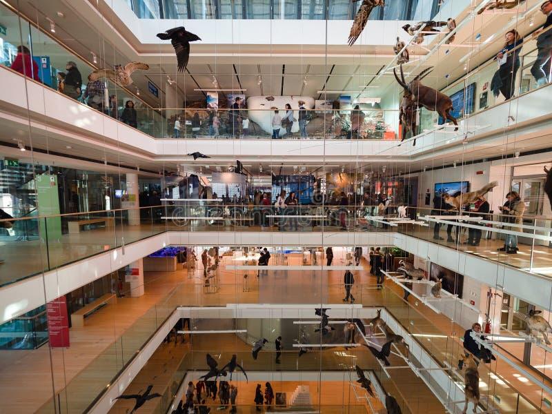 La MUSA è il museo delle scienze di Trento L'interno i immagini stock