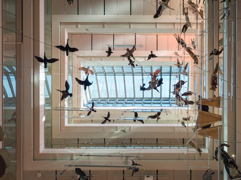 La MUSA es el museo de las ciencias de Trento El interior i foto de archivo libre de regalías