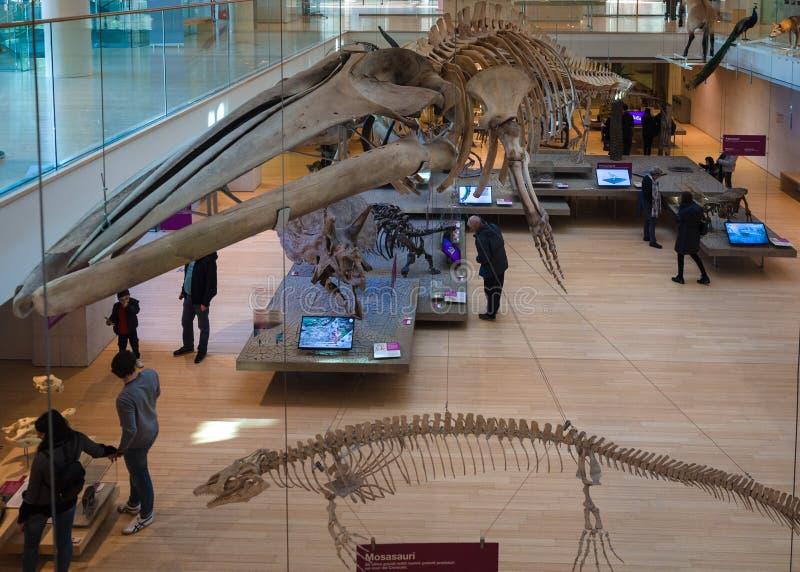 La MUSA es el museo de las ciencias de Trento El interior i foto de archivo