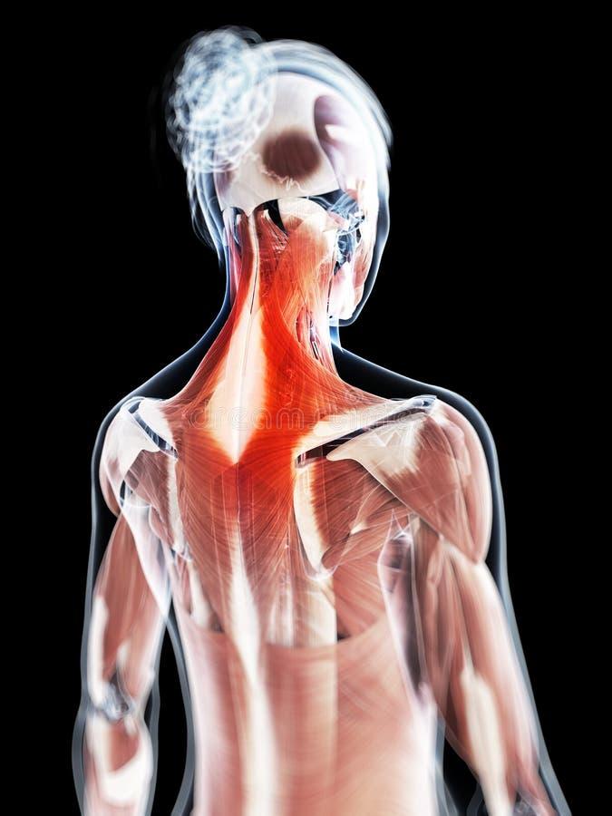 La musculatura del cuello stock de ilustración. Ilustración de ...