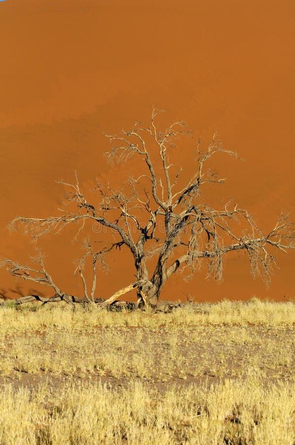 La Namibie photographie stock libre de droits