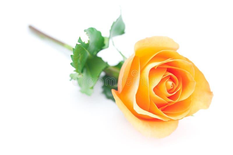 La naranja hermosa subió fotografía de archivo