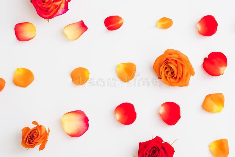 La naranja roja del fondo del extracto del estampado de flores subió fotos de archivo libres de regalías