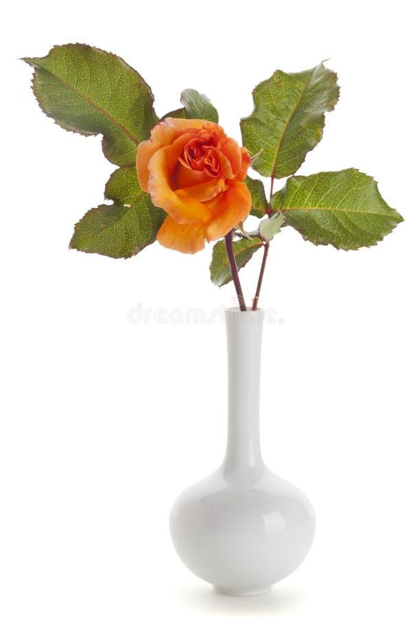 La naranja subió en el florero blanco aislado fotografía de archivo