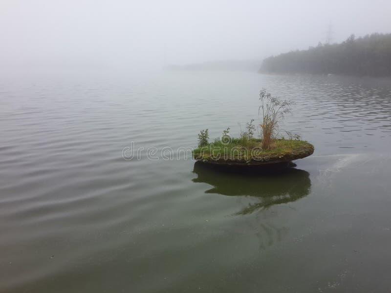 La natura dell'estate nordica immagine stock