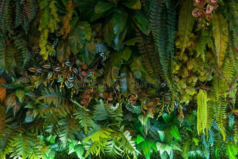 La natura delle foreste pluviali tropicali pianta la decorazione artificiale del giardino per fondo fotografia stock libera da diritti