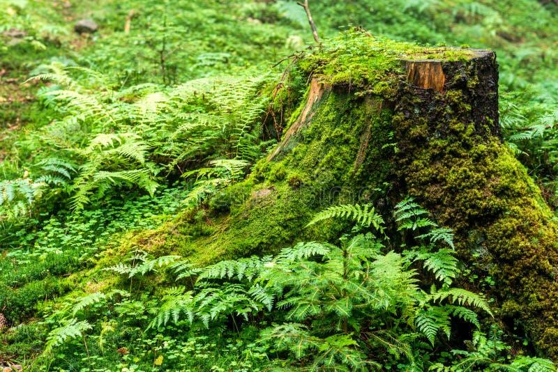 La natura dettaglia il ceppo della foresta fotografia stock