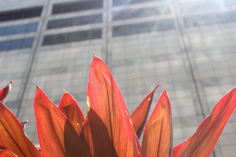La natura incontra la città fotografie stock