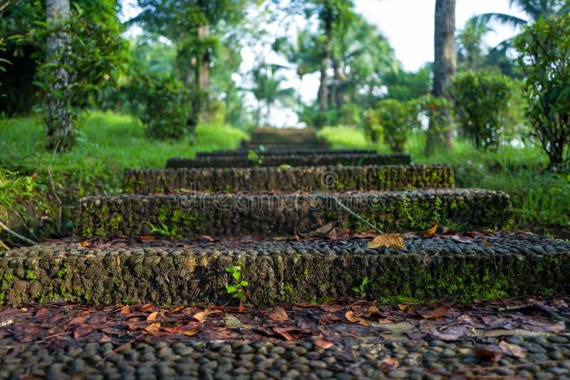 La natura nel tempio di Borobudur è aof Yogyakarta fotografie stock