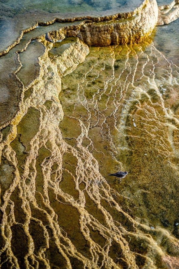 La natura paesaggistica delle sorgenti calde di Mammoth nel parco nazionale di Yellowstone nel Wyoming, Stati Uniti d'America fotografia stock libera da diritti