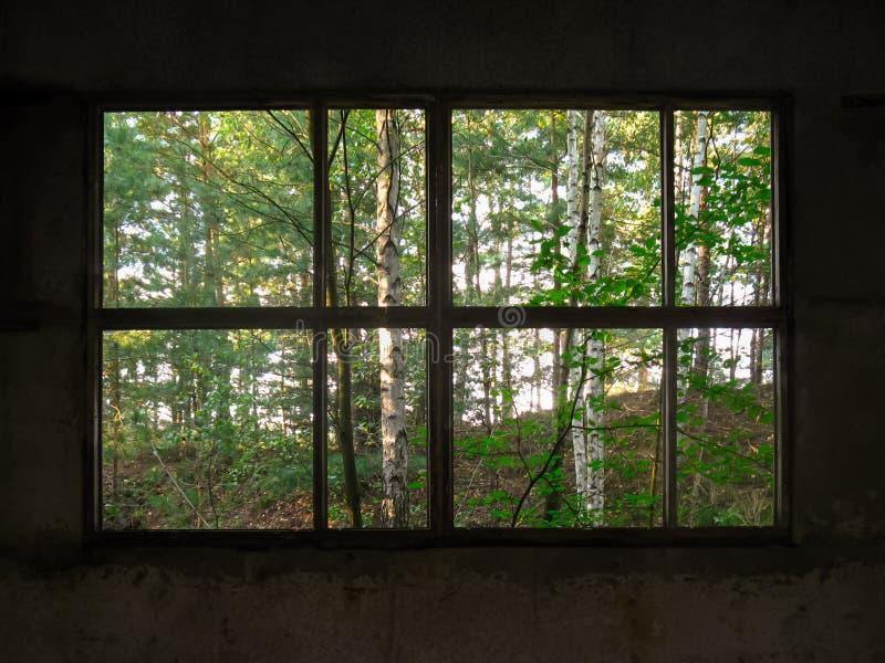 La natura selvaggia della foresta e una casa abbandonata immagine stock libera da diritti