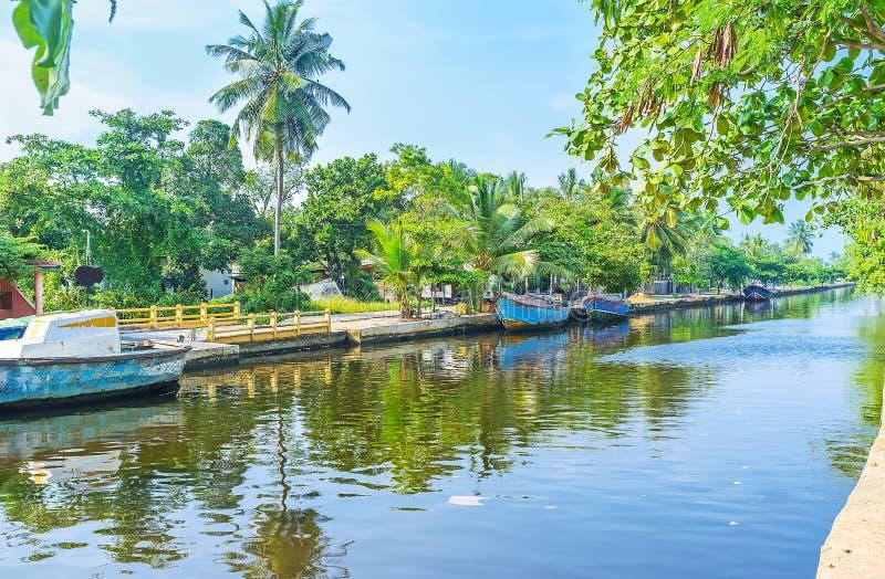 La natura tropicale lungo il canale del ` s di Hamilton, Colombo fotografia stock