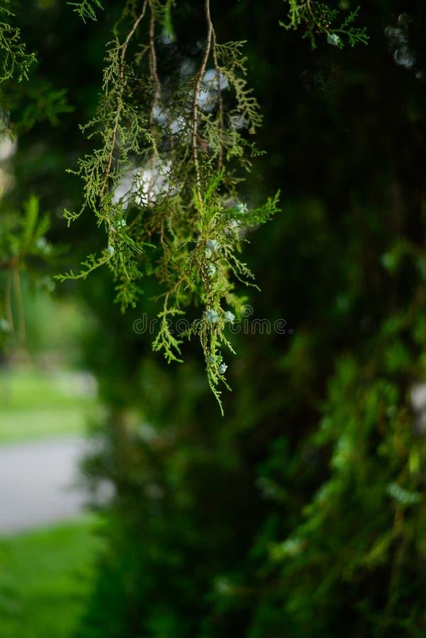 La natura verde immagine stock