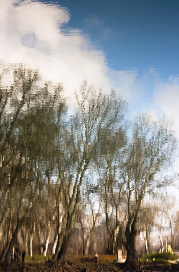 La naturaleza borrosa, árboles del parque reflejó en aguas de río fotos de archivo libres de regalías