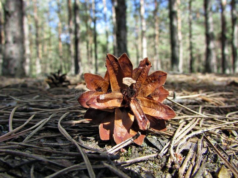 La naturaleza del bosque es un topetón en los árboles del fondo y la hierba seca imagenes de archivo