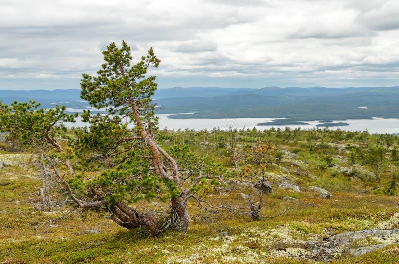 La naturaleza del norte fotos de archivo