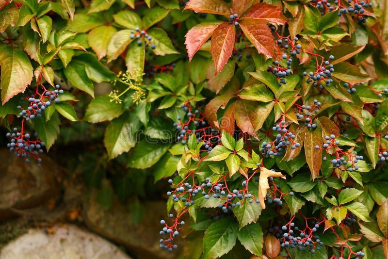 La naturaleza en otoño en Meteora es una atracción turística en más para su belleza y sus colores encantadores foto de archivo libre de regalías