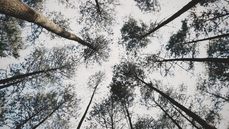 La naturaleza hace calma de la sensación foto de archivo