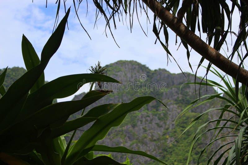 La naturaleza hermosa de Tailandia con una visión a través de las plantas a la montaña imagen de archivo