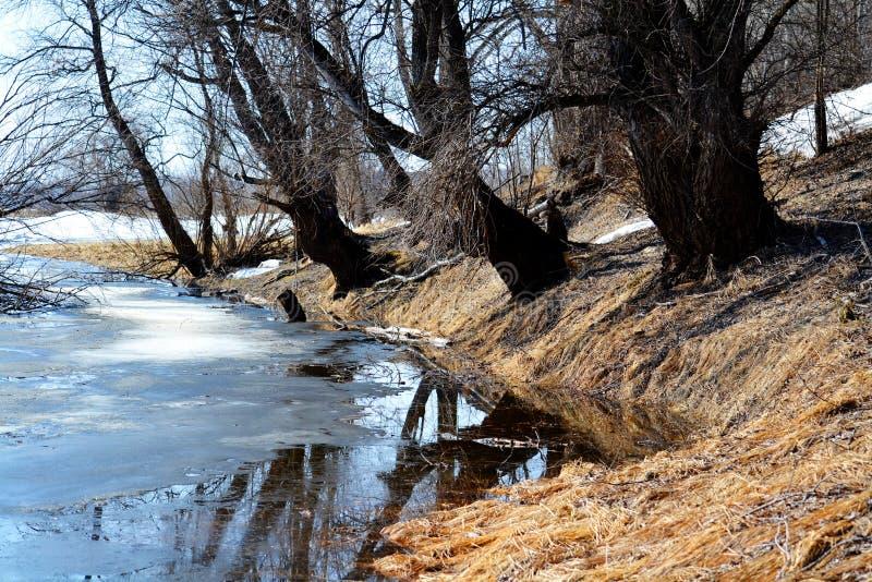 La nature Altaya satisfait l'oeil image libre de droits