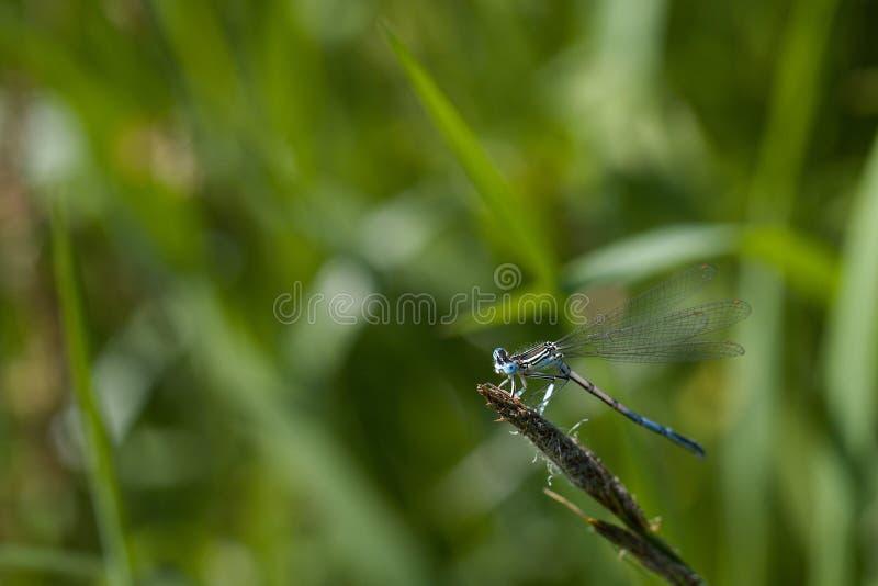 La nature des libellules à l'extérieur de l'insecte photographie stock