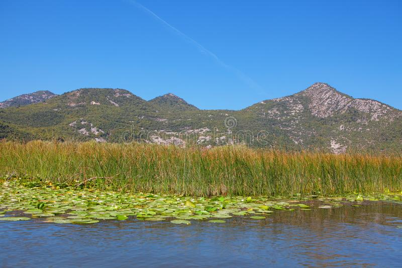 La nature du lac de Skadar photographie stock