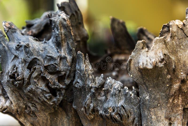 La nature du vieux bois de construction délabré photo libre de droits