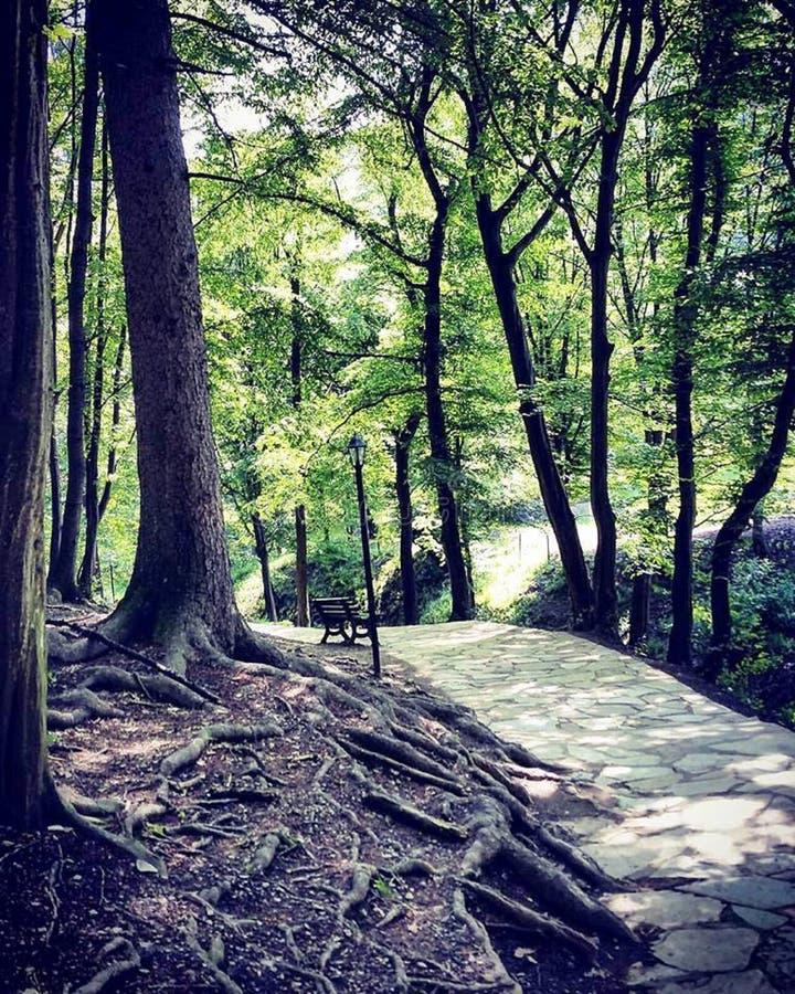 La nature est l'art d'un dieu La Transylvanie ! photos stock