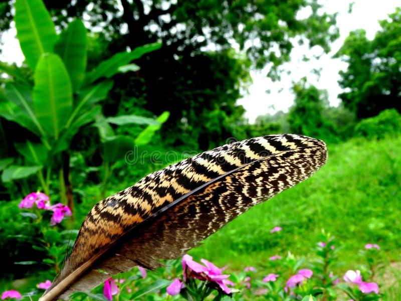 La nature est un art images libres de droits