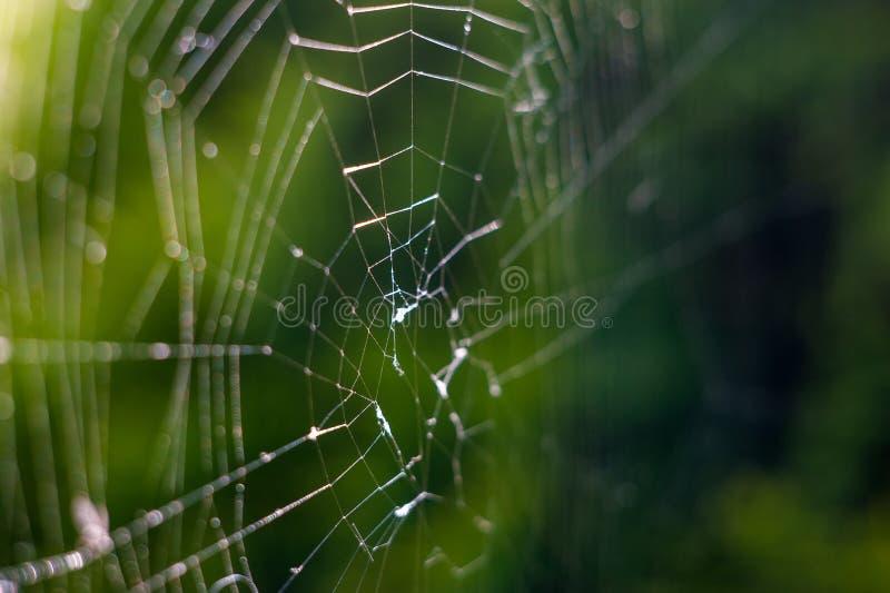 La nature, fin d'une toile d'araign?e avec la ros?e laisse tomber le mouvement lent photo stock