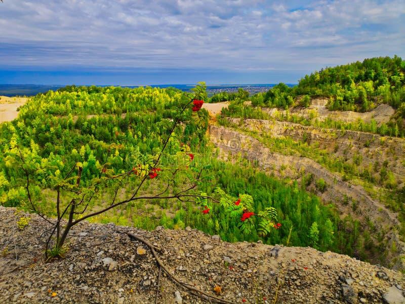 La nature photographie un petit rowan contre une carrière de calcaire avec des terrasses arborées et un ciel sombre avec des cum photo stock