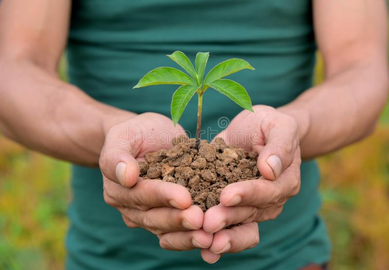 La nature plante des concepts disponibles de holdind photo stock
