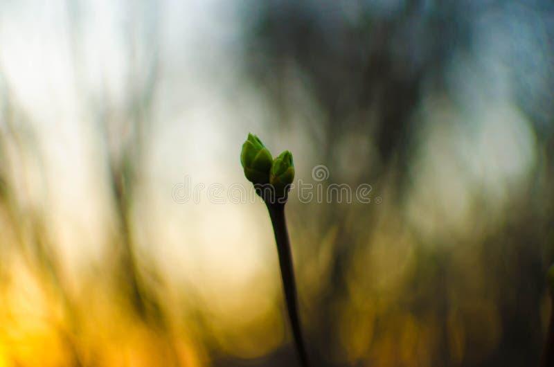 La nature se réveille images stock