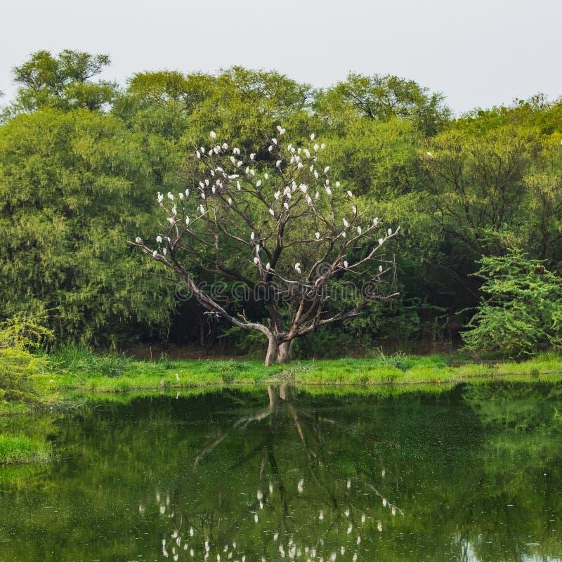 La nature tire son le meilleur parti photographie stock