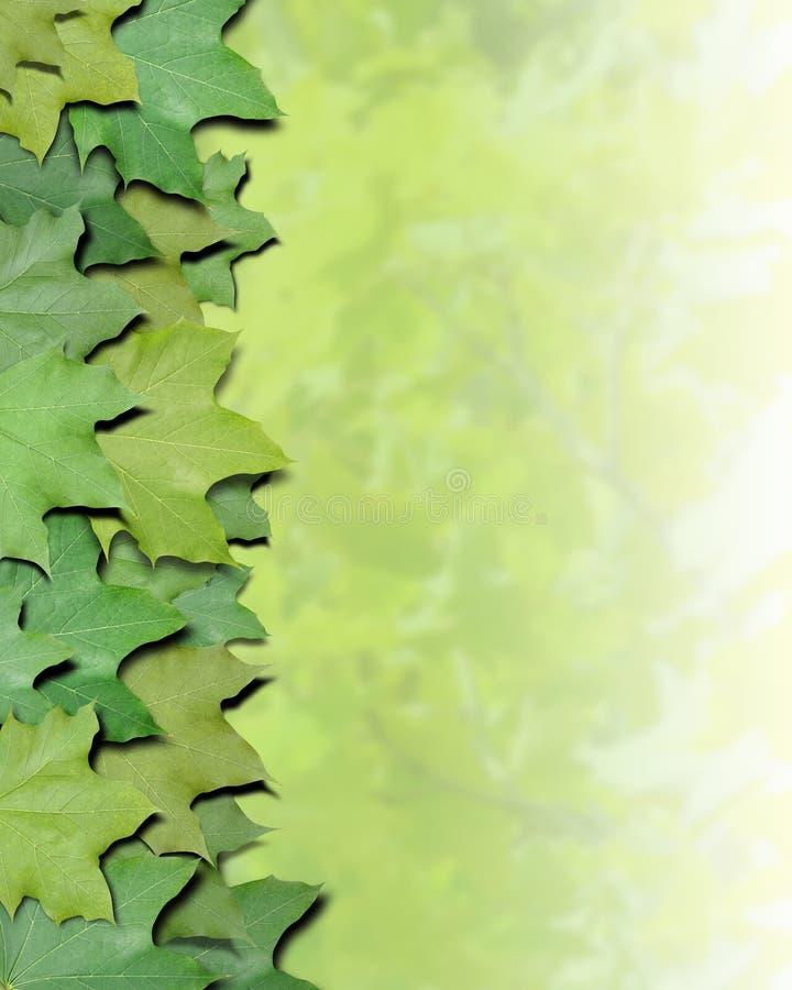 La nature verte laisse le cadre images libres de droits