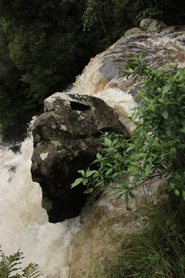 La nature verticale de cascade de crique de snobs aménage Forest Scene Victoria Australia en parc images libres de droits