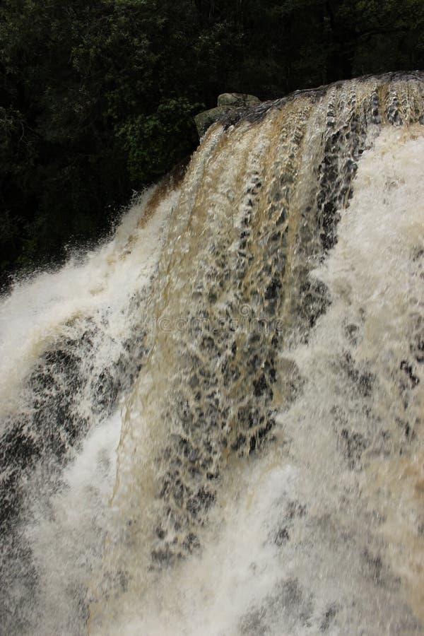 La nature verticale de cascade de crique de snobs aménage Victoria Australia en parc image libre de droits